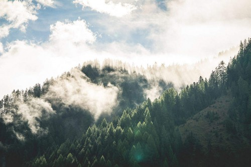 beautiful-morning-mountain-forest-scenery_free_stock_photos_picjumbo_DSC02176-1080x720.jpg