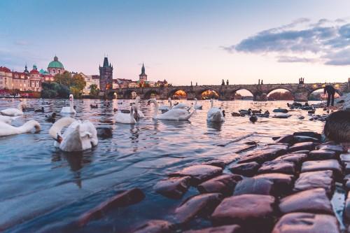 beautiful-sunset-panorama-with-swans-and-charles-bridge-in-prague_free_stock_photos_picjumbo_dsc01300.jpg